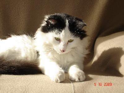Cherche chaton poils longs pour câlinous - Prem's p 26 87818210