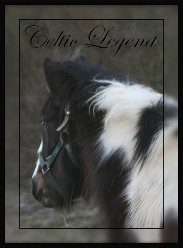 "Celtic Legend ""Gypsy de Lorraine"" News P 2 Celtic10"