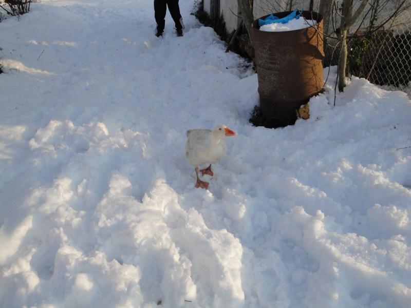 8 mars 2010 maureillas sous la neige Dsc00812