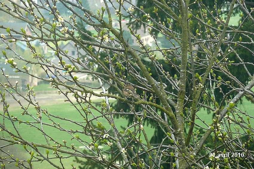 2010: dans mon jardin! oiseaux moutons poissons 21_avr14