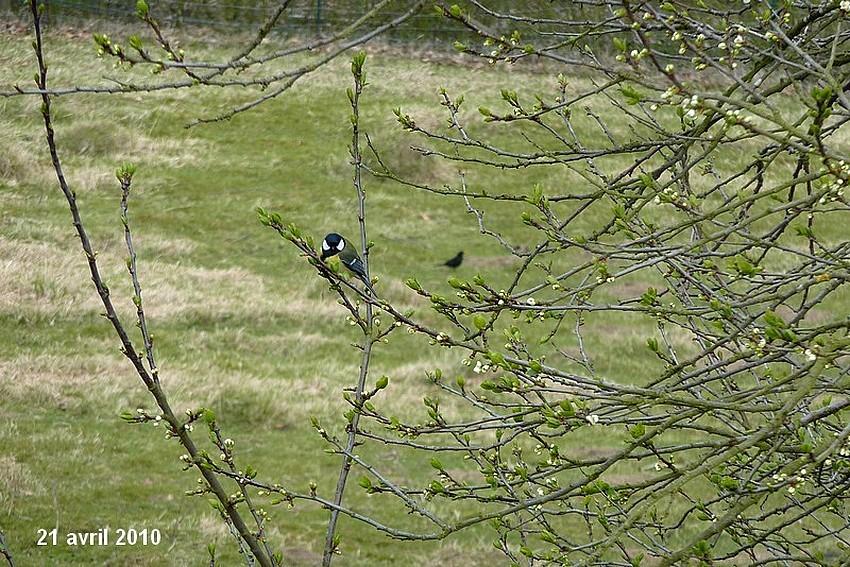 2010: dans mon jardin! oiseaux moutons poissons 21_avr15
