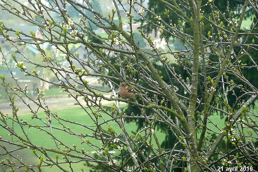 2010: dans mon jardin! oiseaux moutons poissons 21_avr16