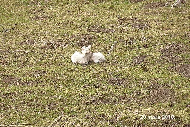 2010: dans mon jardin! oiseaux moutons poissons 21mars14