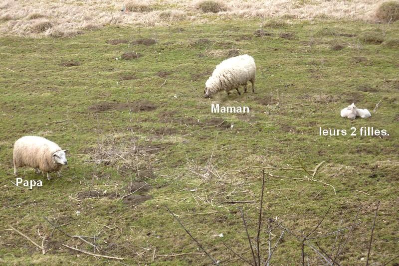2010: dans mon jardin! oiseaux moutons poissons 21mars15