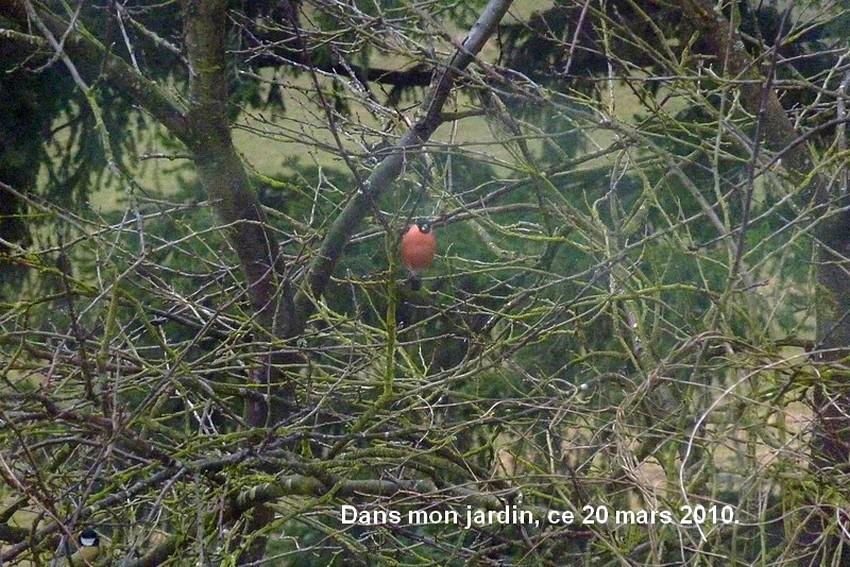 2010: dans mon jardin! oiseaux moutons poissons 21mars84