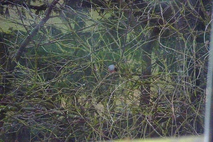 2010: dans mon jardin! oiseaux moutons poissons 21mars85