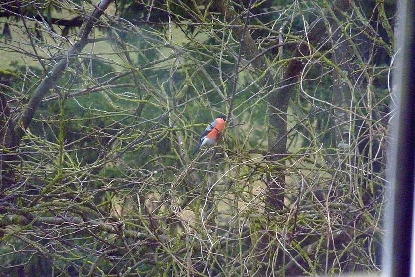2010: dans mon jardin! oiseaux moutons poissons 21mars86