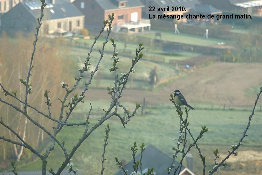 2010: dans mon jardin! oiseaux moutons poissons - Page 2 22_avr10
