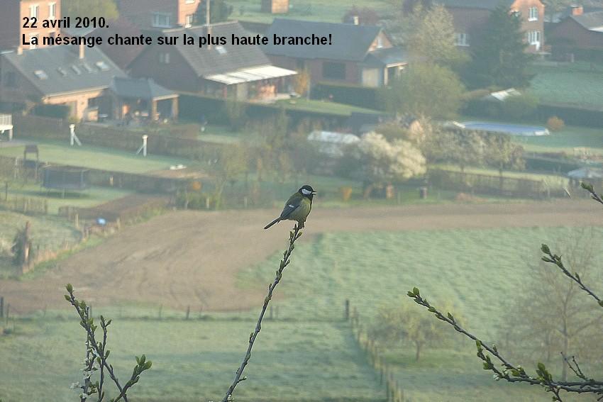 2010: dans mon jardin! oiseaux moutons poissons - Page 2 22_avr12