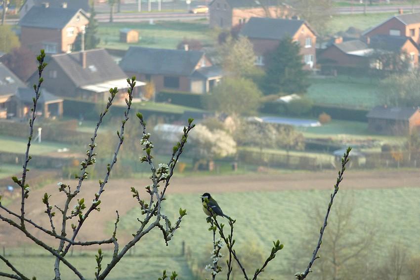 2010: dans mon jardin! oiseaux moutons poissons - Page 2 22_avr13