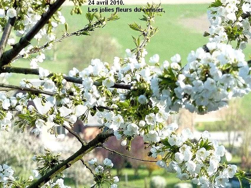 2010: dans mon jardin! oiseaux moutons poissons - Page 2 24_avr31