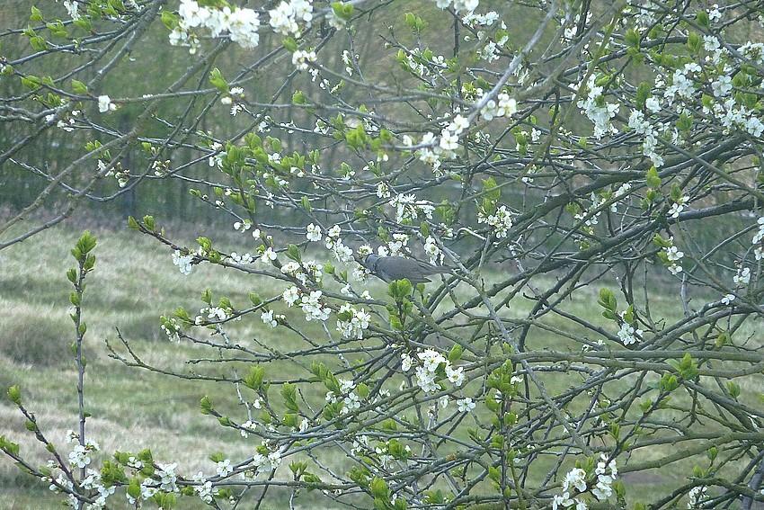 2010: dans mon jardin! oiseaux moutons poissons - Page 2 25_avr15