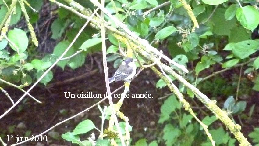 2010: dans mon jardin! oiseaux moutons poissons - Page 3 29_00110