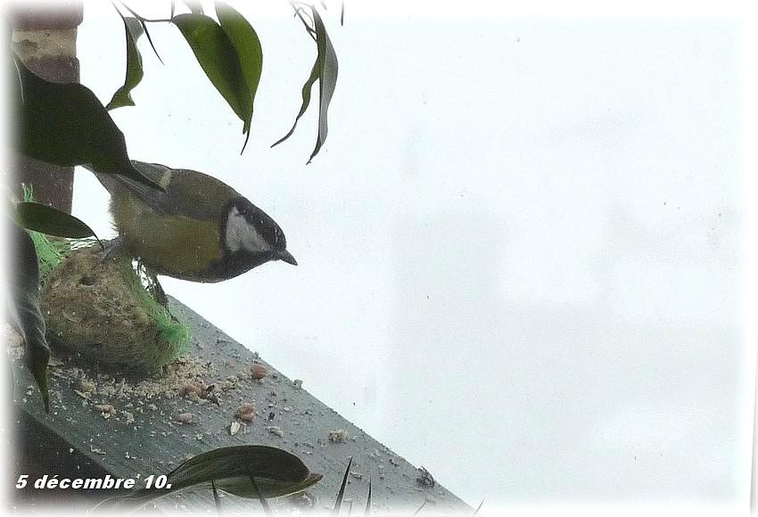 2010: dans mon jardin! oiseaux moutons poissons - Page 5 Jos_0036