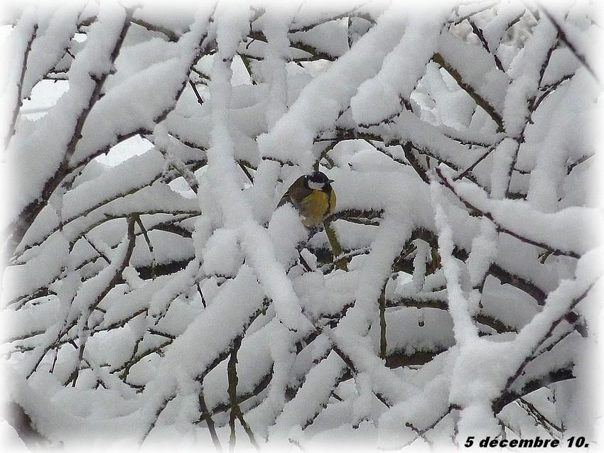 2010: dans mon jardin! oiseaux moutons poissons - Page 5 Jos_0038