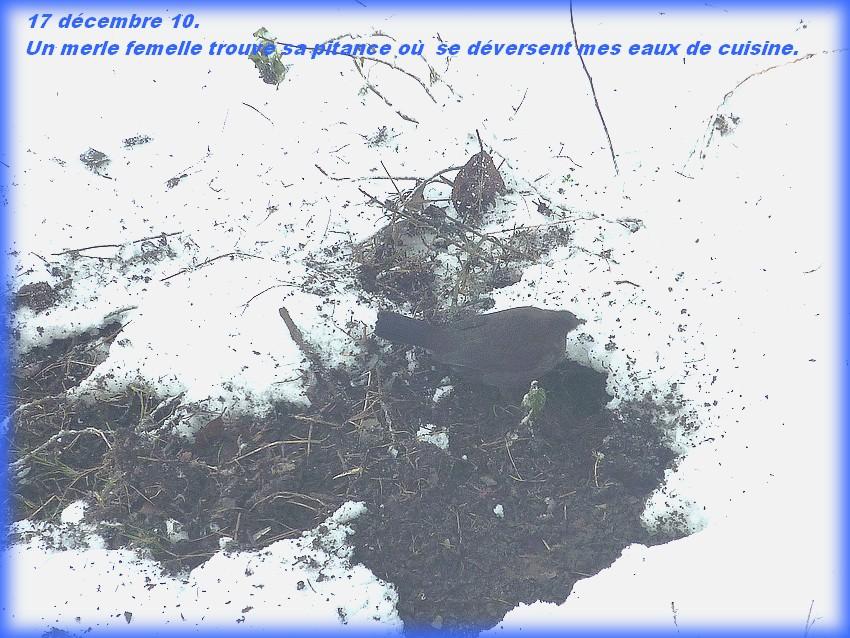 2010: dans mon jardin! oiseaux moutons poissons - Page 5 Jos_0083
