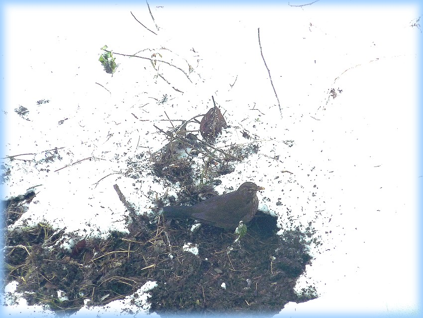 2010: dans mon jardin! oiseaux moutons poissons - Page 5 Jos_0086