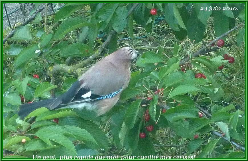 2010: dans mon jardin! oiseaux moutons poissons - Page 3 Samedi51
