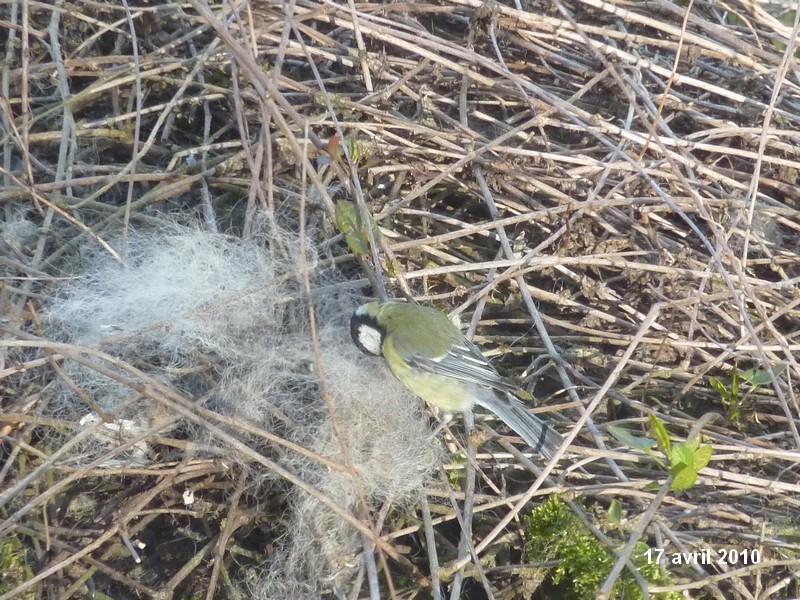 2010: dans mon jardin! oiseaux moutons poissons Wanlin34