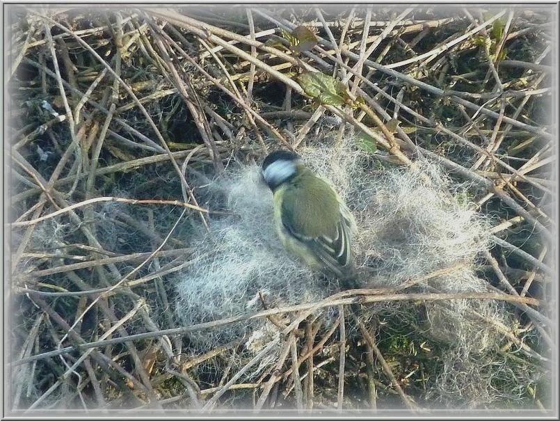 2010: dans mon jardin! oiseaux moutons poissons Wanlin45