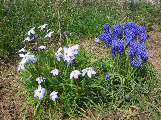 Quelques photos du jardin Dscn1317