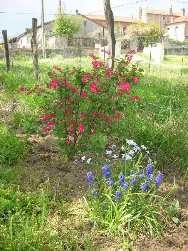 Quelques photos du jardin Dscn1321