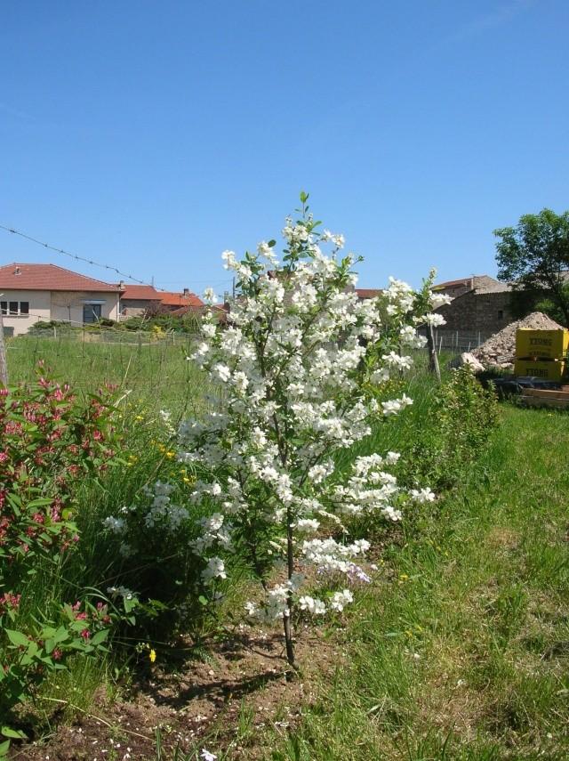 Quelques photos du jardin Dscn1326