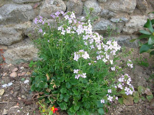 Quelques fleurs du moment Dscn9310