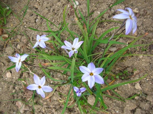 Quelques fleurs du moment Dscn9410