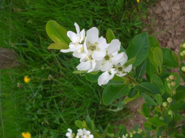 Quelques fleurs du moment Dscn9411