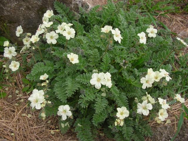 Quelques fleurs du moment Dscn9412
