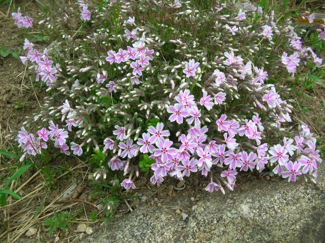 Quelques fleurs du moment Dscn9413
