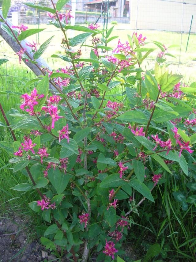 En fleurs! Dscn9519