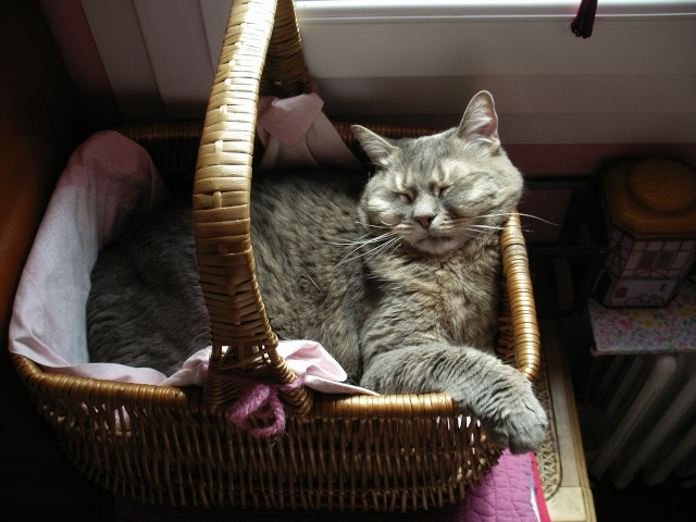 Duo de chats jardiniers! - Page 5 00560