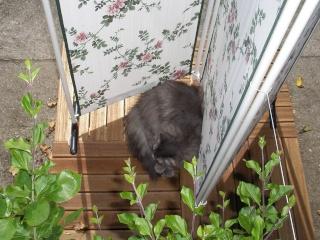Duo de chats jardiniers! - Page 4 00741
