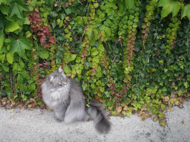 Duo de chats jardiniers! - Page 4 007_311