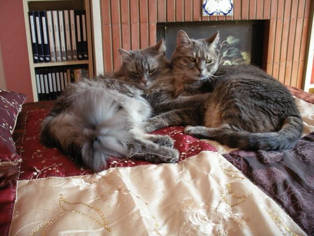 Duo de chats jardiniers! - Page 2 008_310
