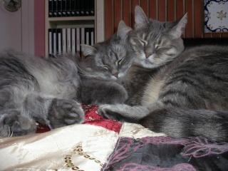 Duo de chats jardiniers! 01128