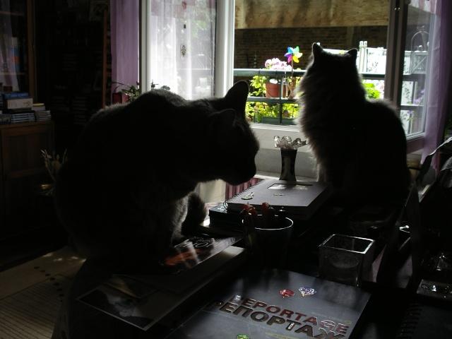 Duo de chats jardiniers! - Page 5 01130