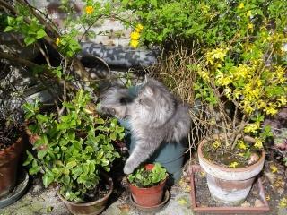 Duo de chats jardiniers! 01243