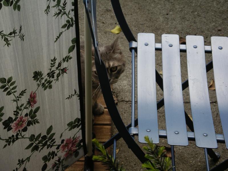 Duo de chats jardiniers! - Page 5 01622