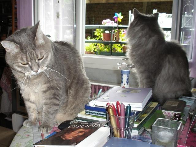 Duo de chats jardiniers! - Page 5 02027
