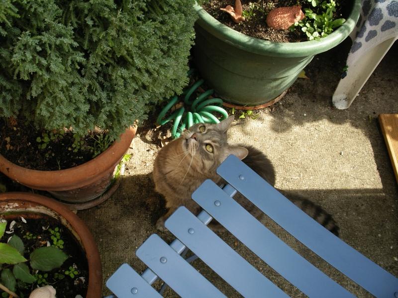 Duo de chats jardiniers! 02118