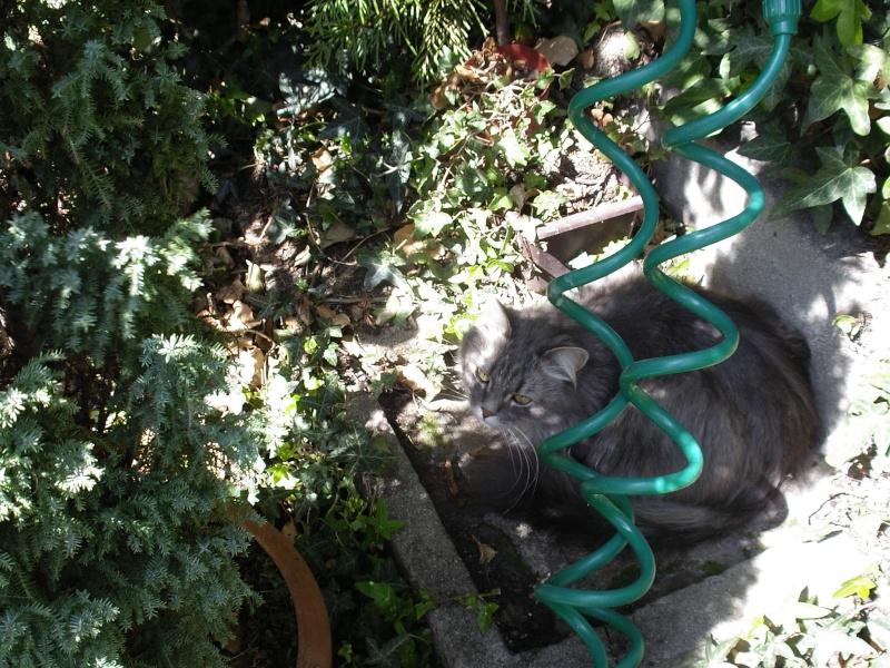 Duo de chats jardiniers! - Page 5 02211