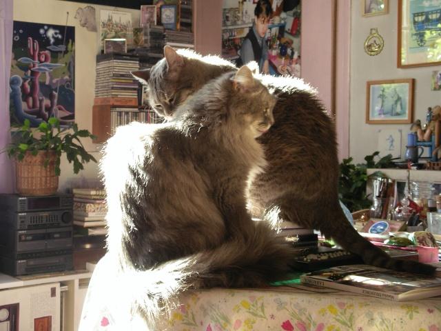 Duo de chats jardiniers! - Page 5 04_11_11