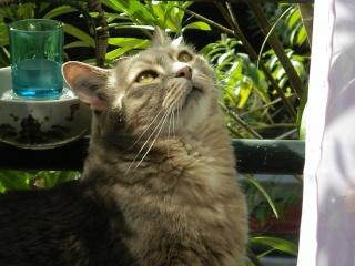 Duo de chats jardiniers! - Page 2 09-08_11