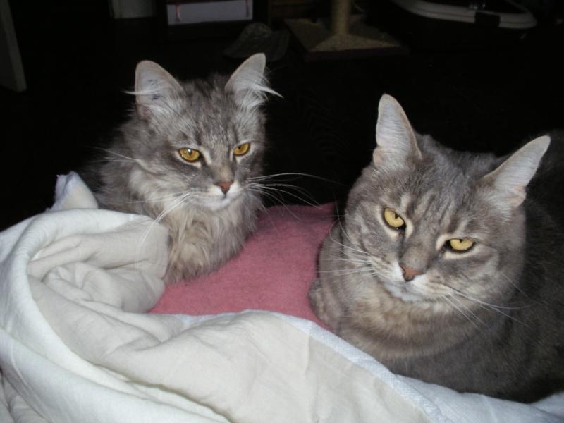 Duo de chats jardiniers! Imgp0210