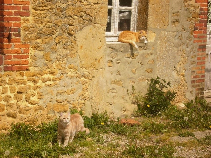 Encore des chats... Marley11