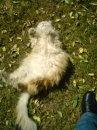 Encore des chats... Neo_bm10