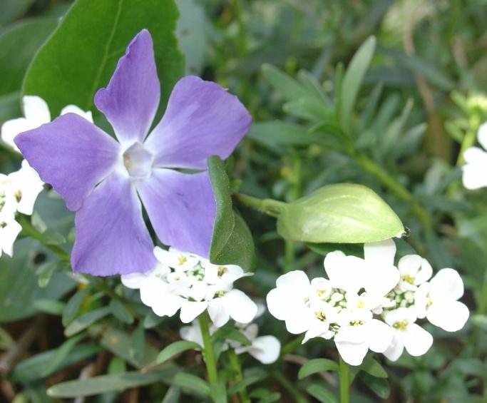 Un jardin fleuri en avril 6a00d810